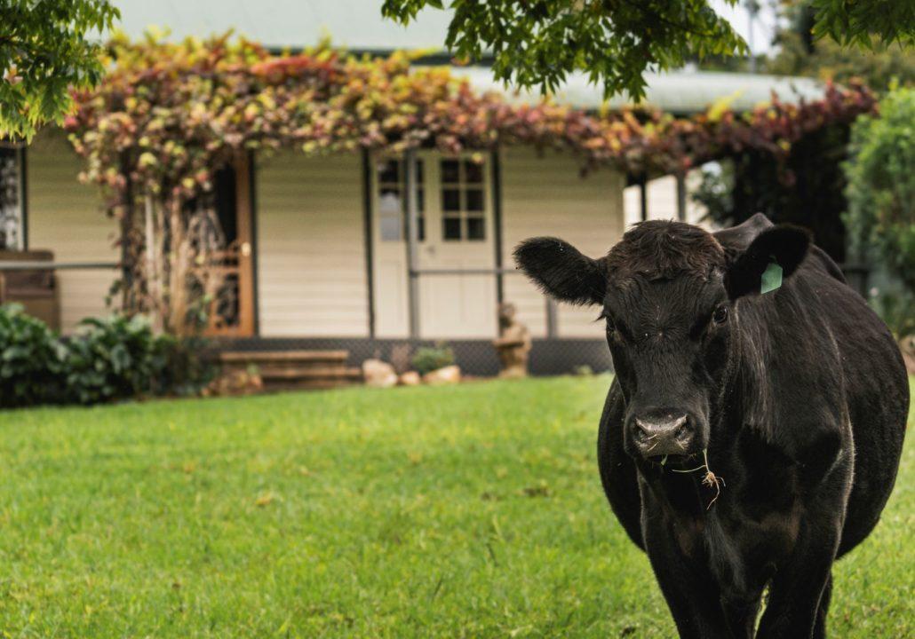 Gloucester Farm Stay