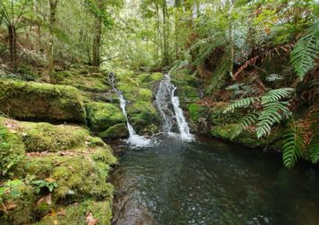 Gloucester Tops Circuit, dense forest and small cascades