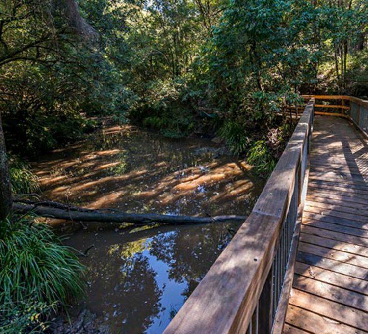 Where to find the best walks around Taree