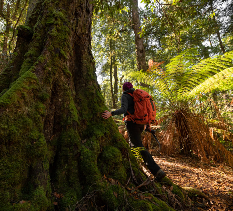 Catherine Boyd's guide to the Gondwana rainforests of Barrington Tops