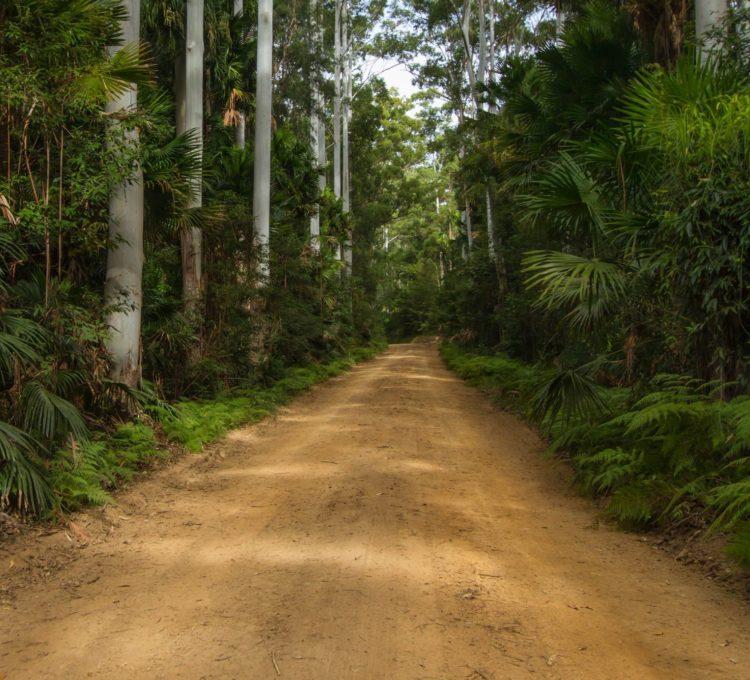 Sugar Creek Road, Wallingat National Park, dense rainforest road