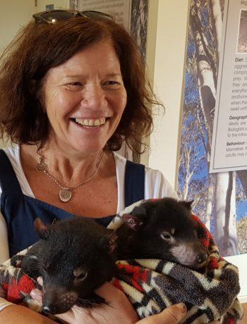 Cuddle a Tasmanian Devil joey at Aussie Ark