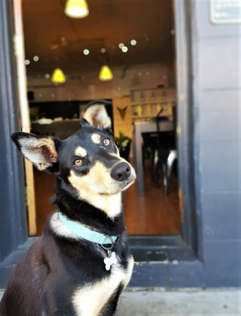 A local's guide to dog friendly cafes