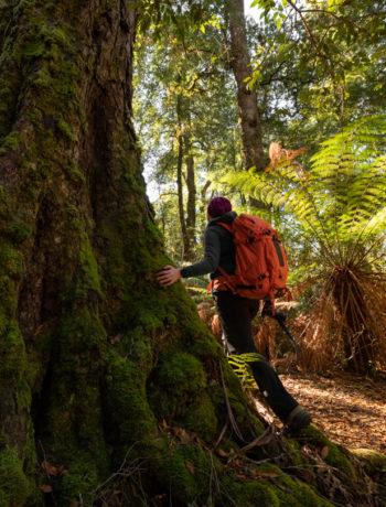 Try shinrin-yoku in Gondwana rainforest