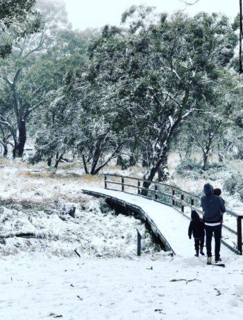 Polblue Swamp Track, Barrington Tops, after heavy snow fall