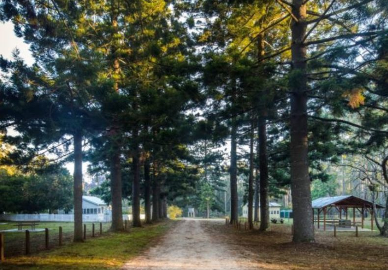 Coopernook Forest Camping Ground