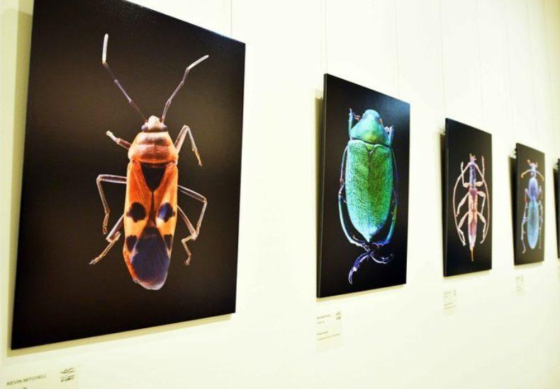 Manning Regional Art Gallery