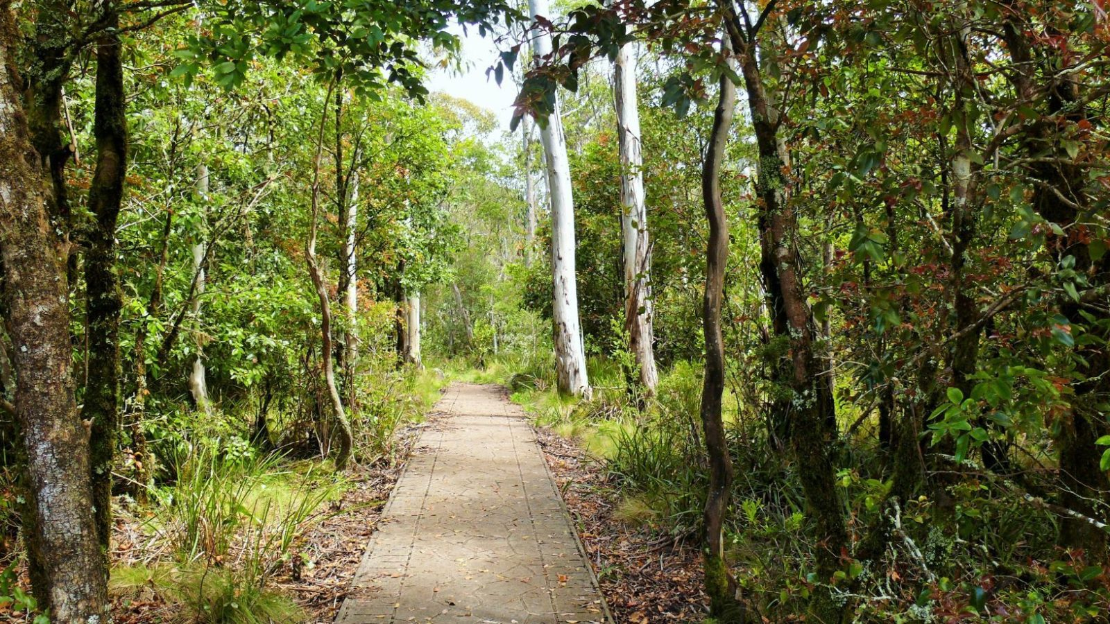 Devils Hole Lookout, Barrington Tops, paved pathway for easy access