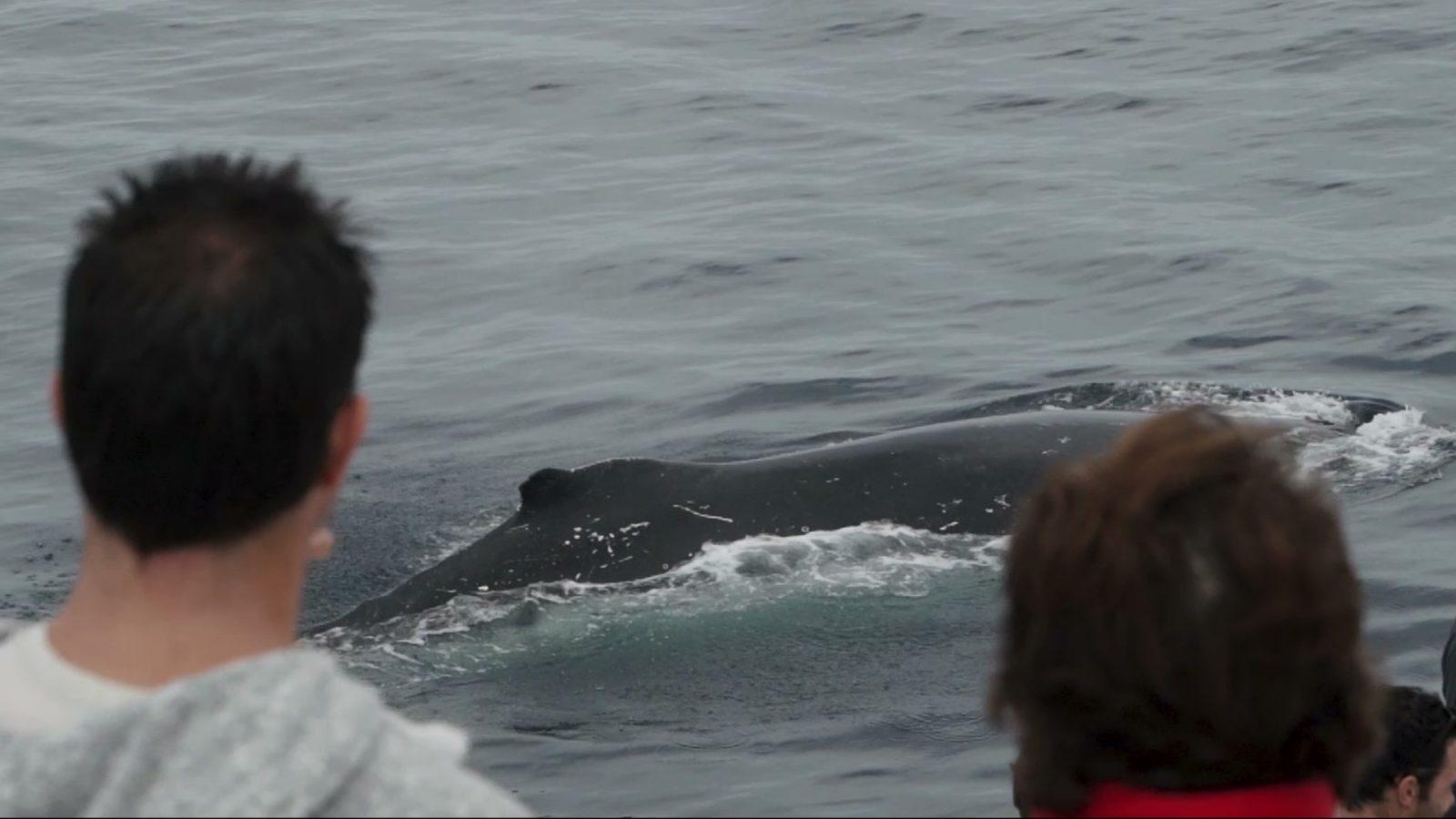 Whale watching on Amaroo Cruises