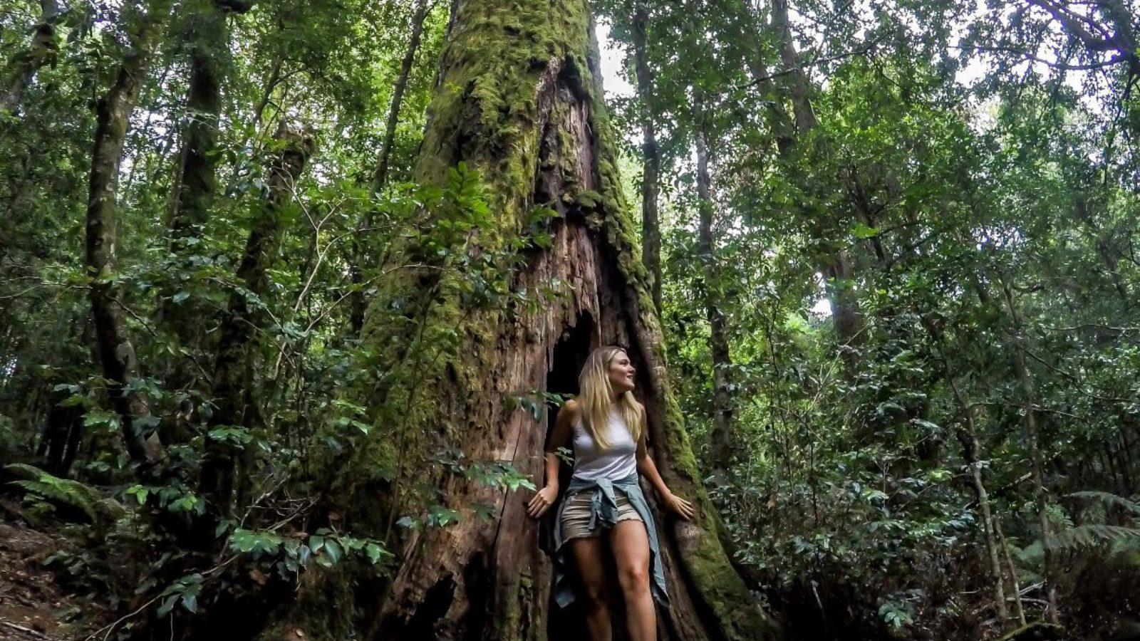 Barrington Tops mossy tree