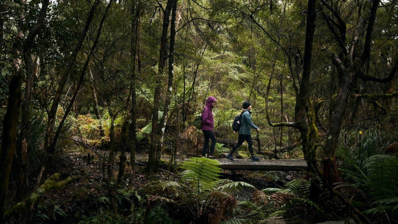 Barrington Tops trail exploring