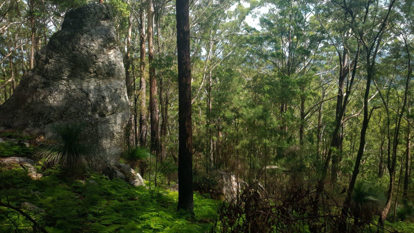 Bulahdelah Mountain bushland