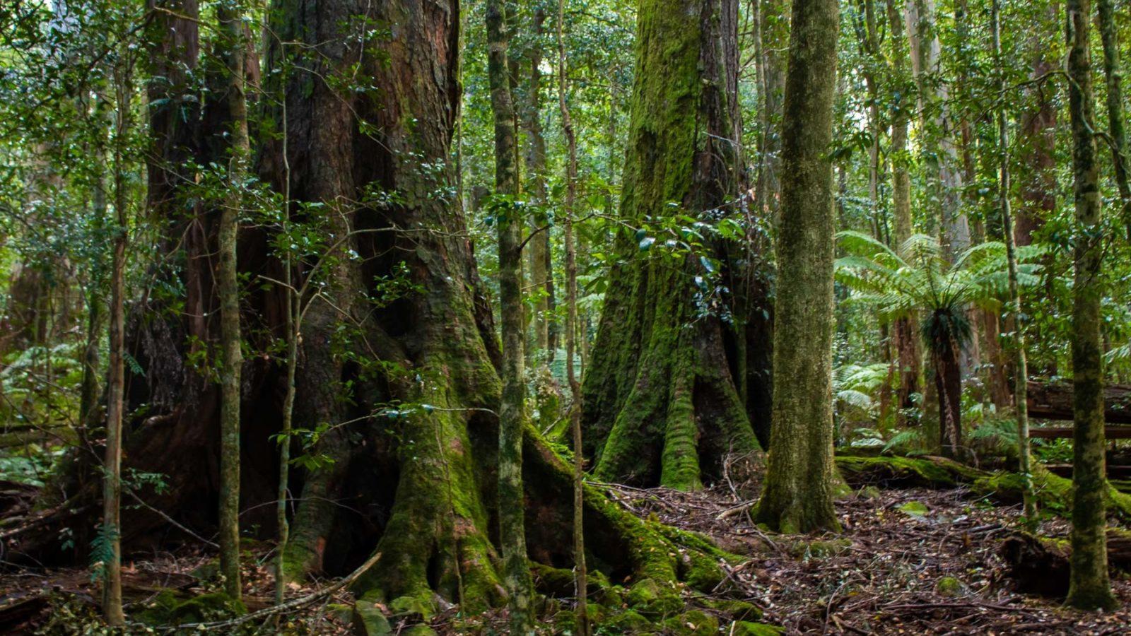 Burraga Swamp Track - Image Deb Alcock IG/@myaustraliannativejourney