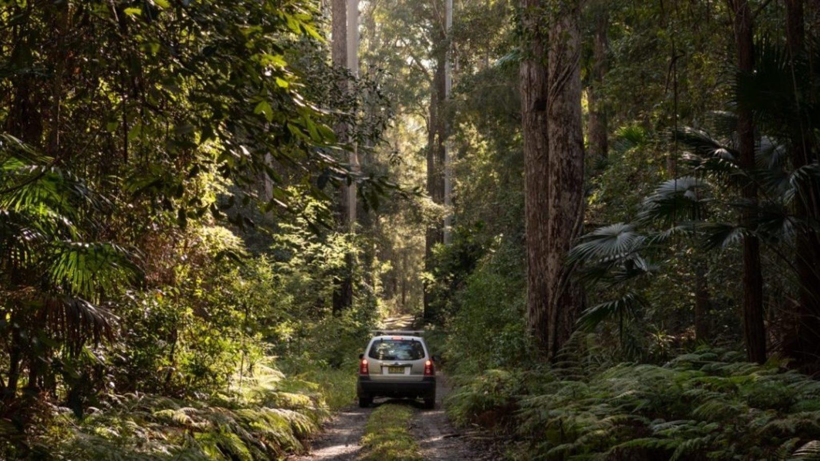 Wallingat National Park - Catherine Boyd