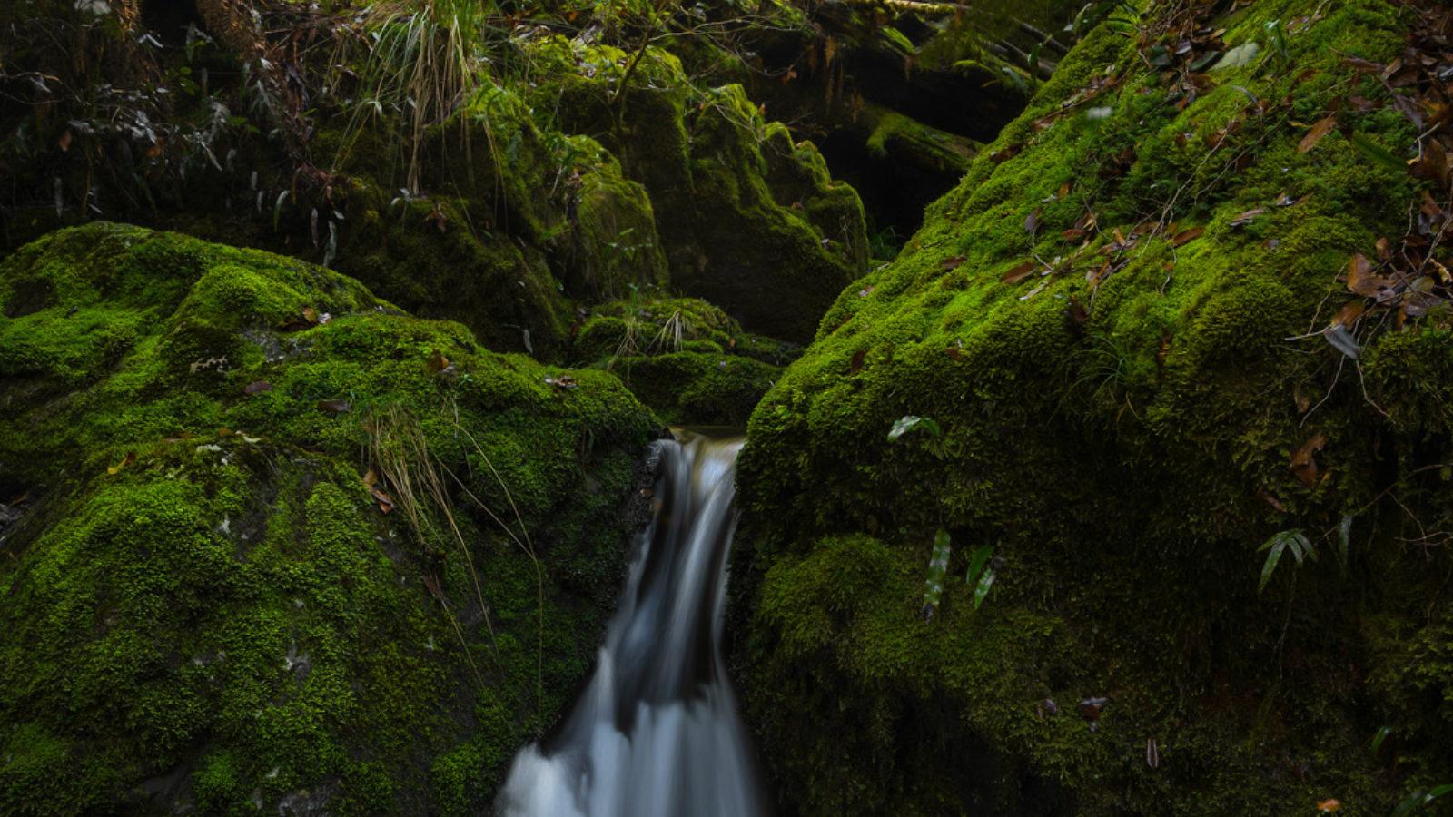 Gloucester Tops cascade by Catherine Boyd