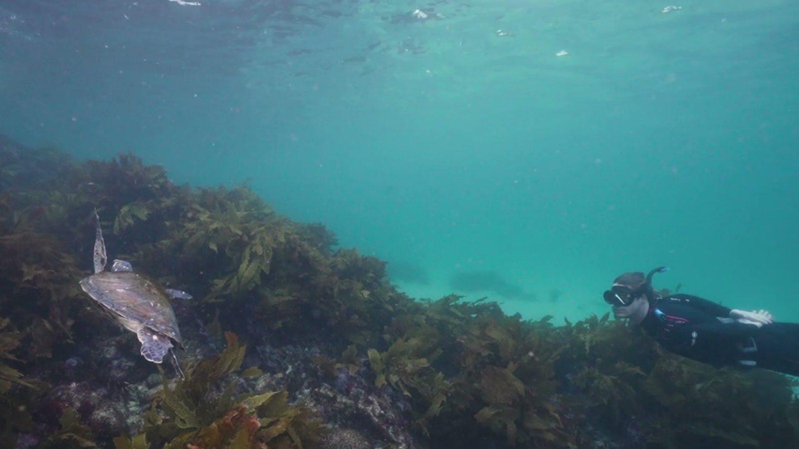 Marine life at Seal Rocks