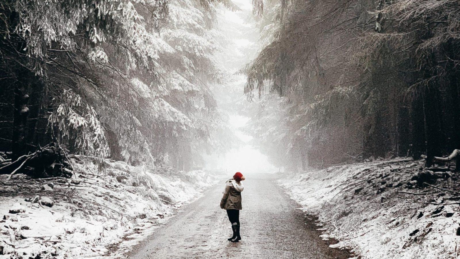Barrington Tops Snow through the Firs