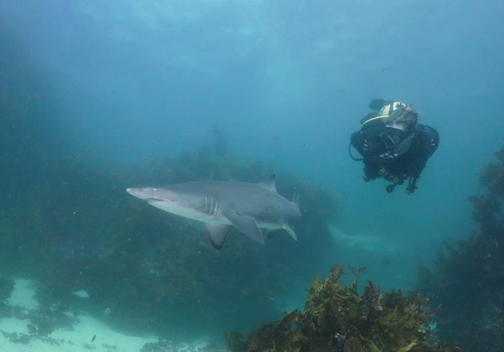 The Pinnacle Dive Site