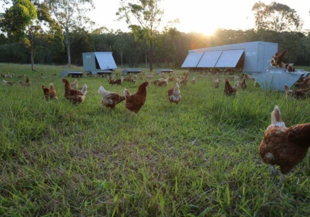 Topi Open Range Farm