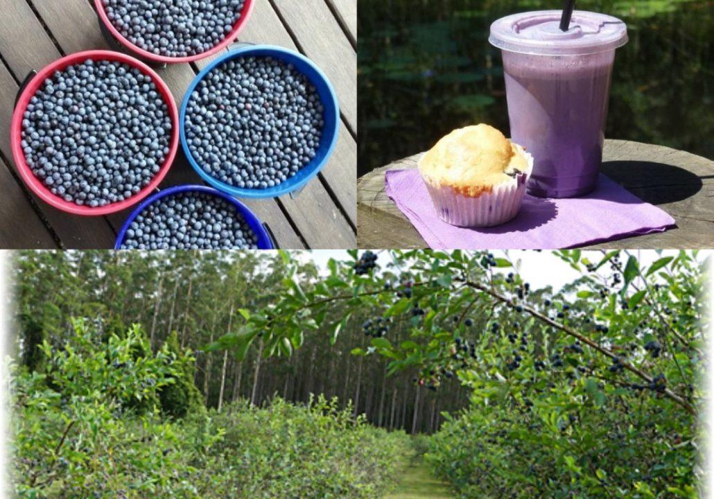 Brackenridge Berries Waitui
