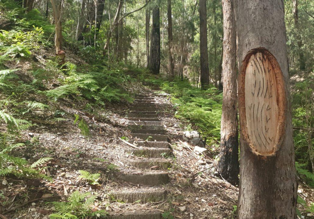 Bulahdelah Mountain walking track