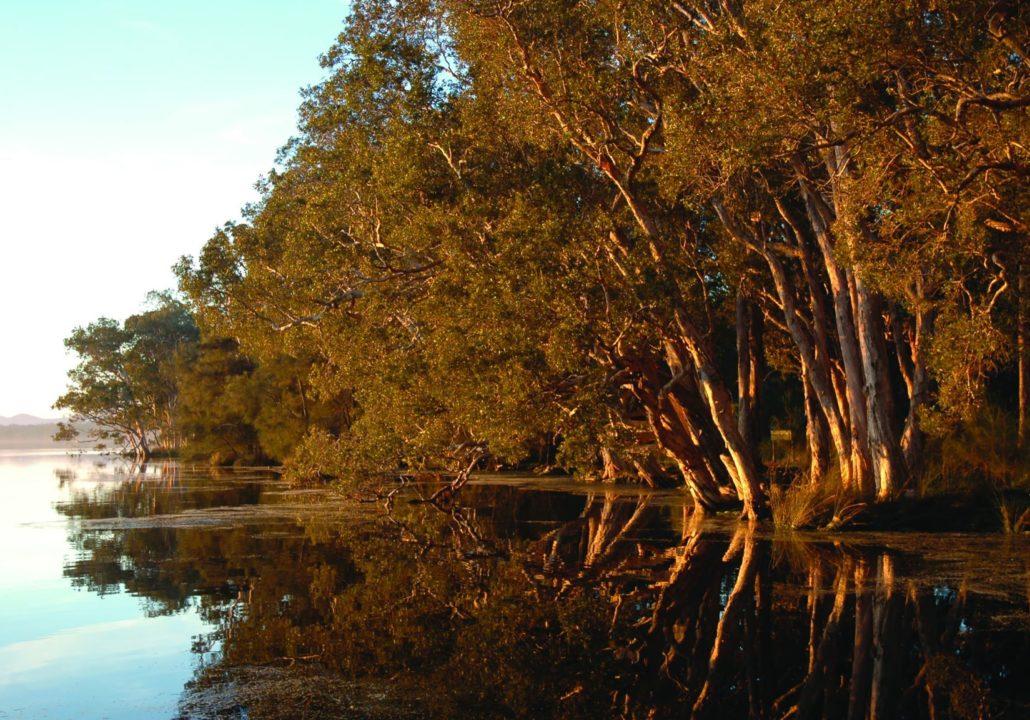 Myall Lake, Myall Lakes National Park shoreline