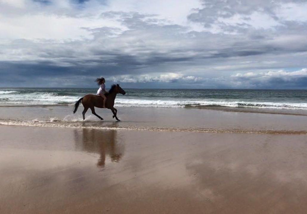 Sea Horse Diamond Beach