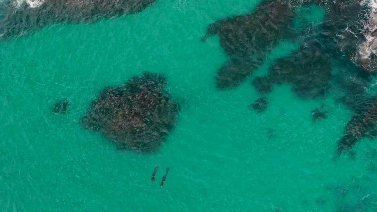 Diving at Big Rock, Seal Rocks