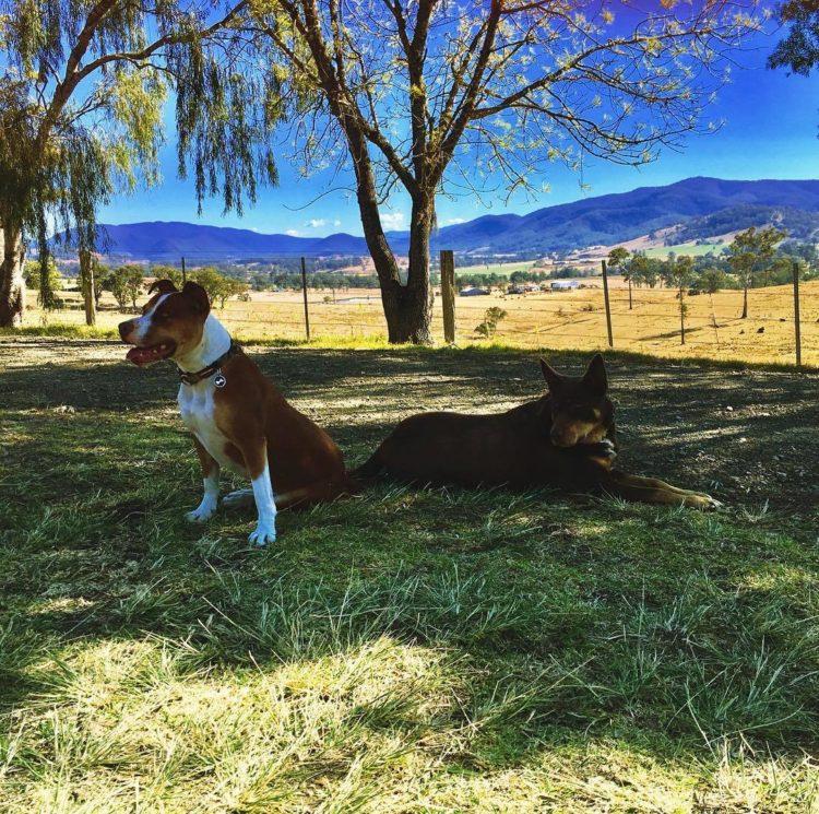 Dam It Getaway Gloucester NSW dog friendly accommodation