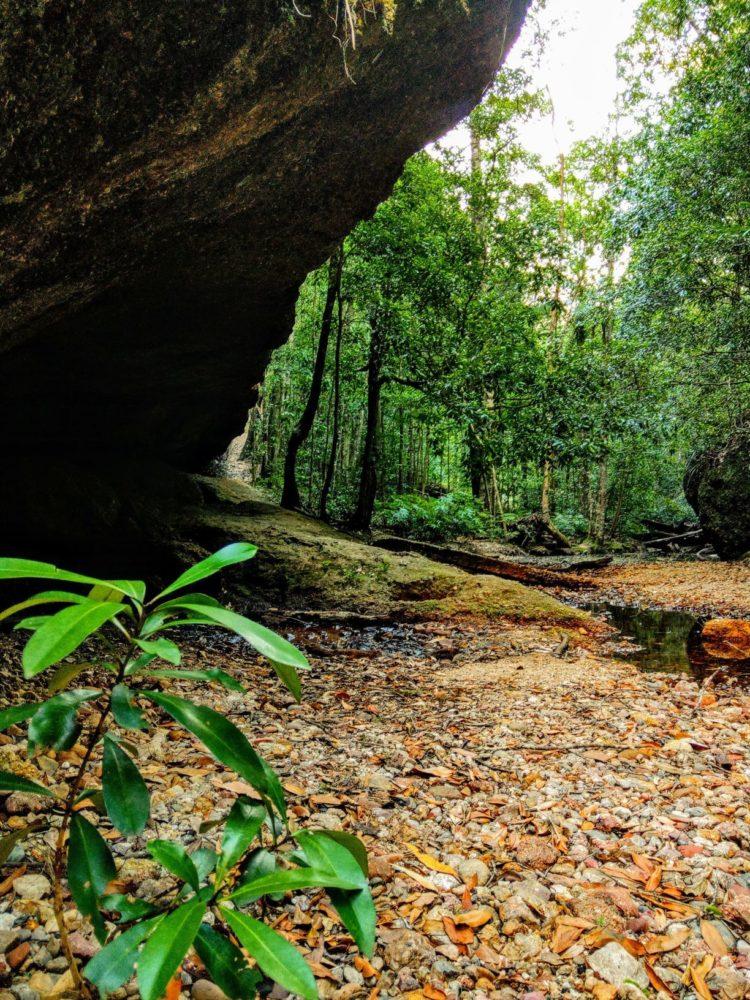 Newbys Cave, Coorabakh National Park, green bushland