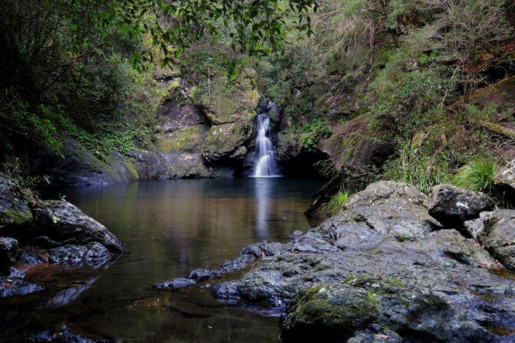 Potaroo falls, Dingo Forest
