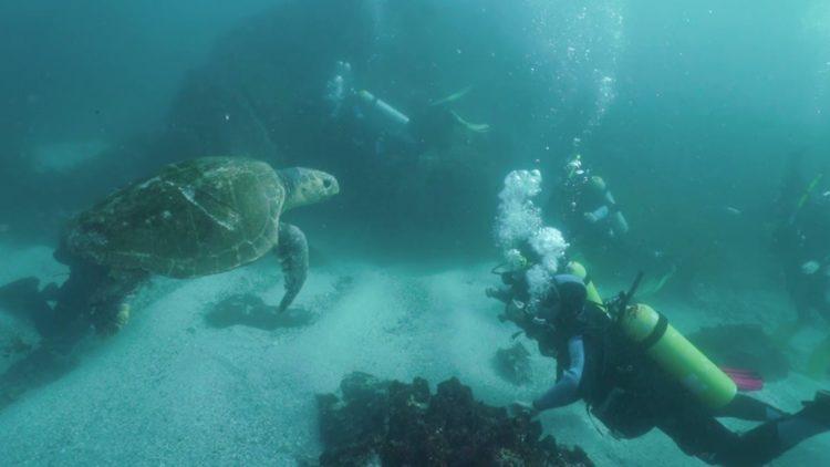 Seal Rocks turtle
