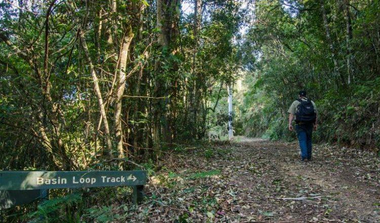 Basin loop walking track copeland