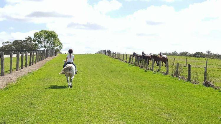 Manning park rest horse friendly accommodation barrington coast nsw