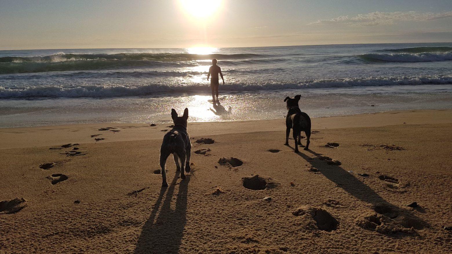 Dog walking and swimming Diamond Beach