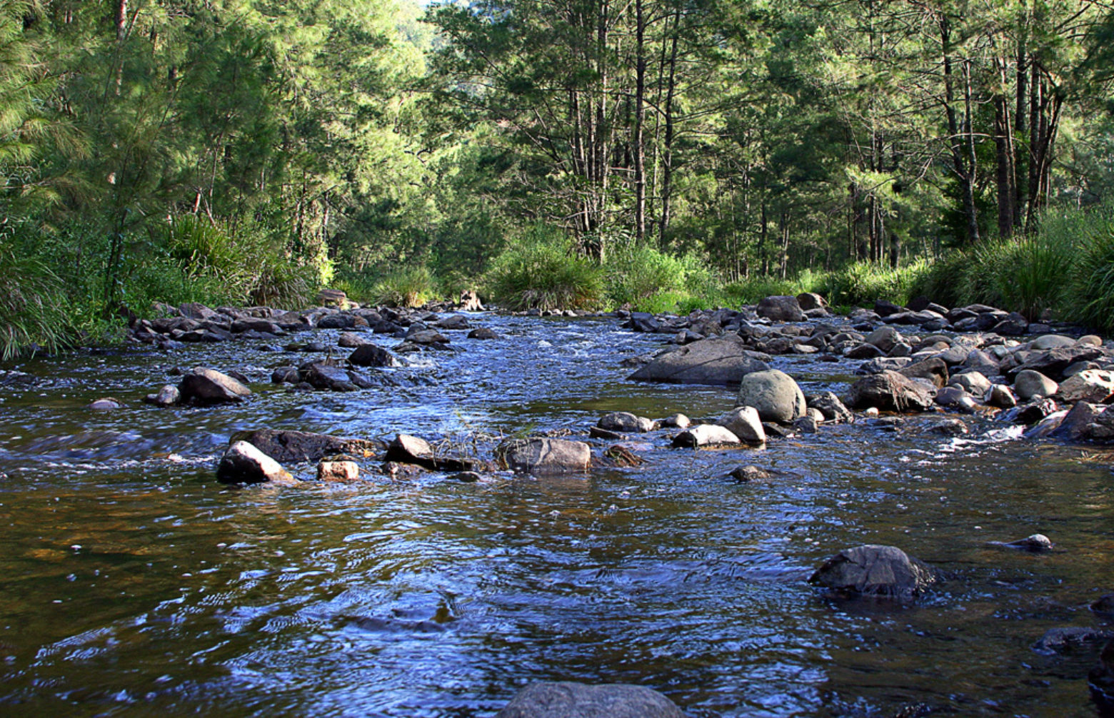 Manning River at Gloryvale Reserve