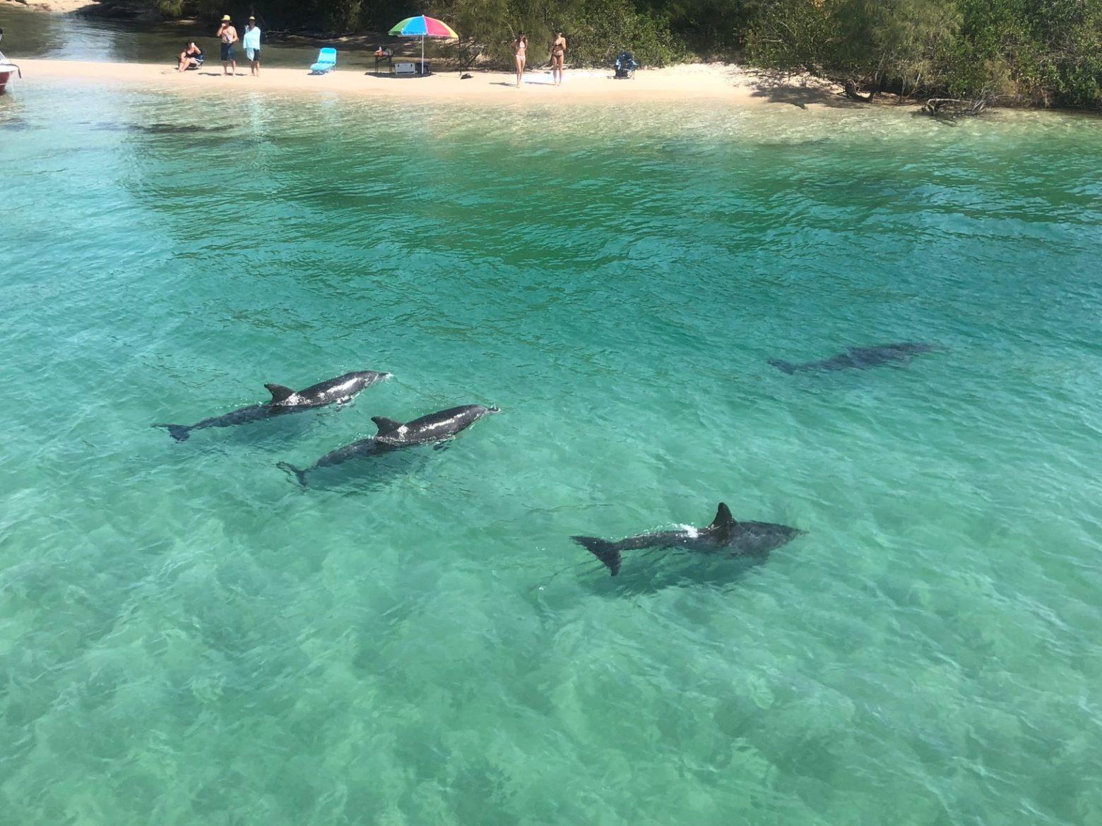 Wallis Lake Forster Dolphins