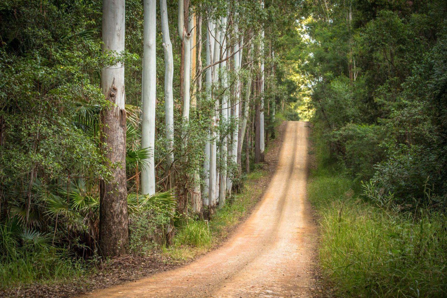 Whoota Whoota Lookout Road, Wallingat National Park
