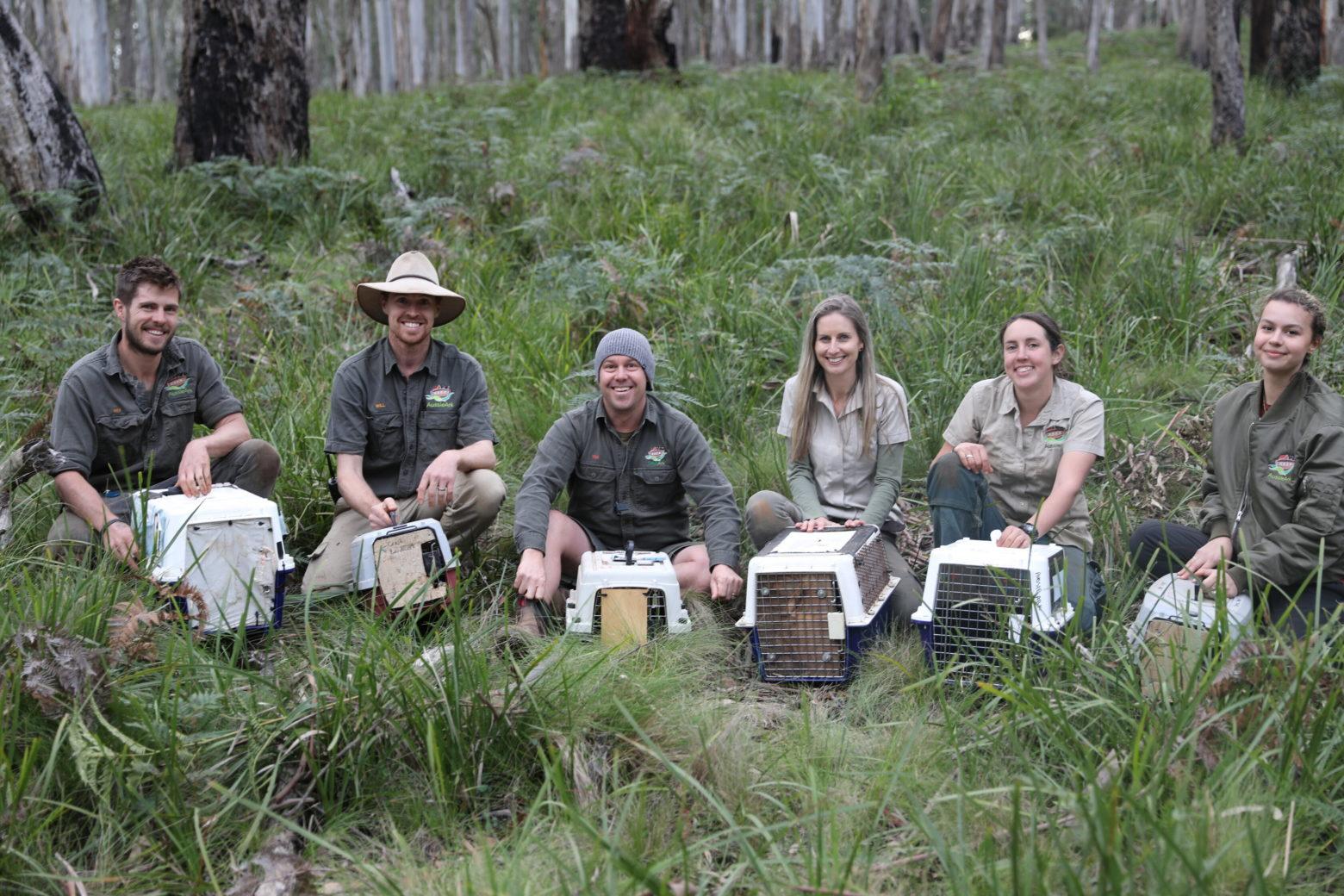 Aussie Ark team releasing Eastern Quolls into Barrington Wildlife Sanctuary